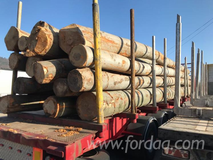 Beech-White-Ash-Oak-Logs