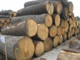Hardwood  Unedged Timber - Flitches - Boules For Sale - Oak boules