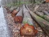Cherry  Hardwood Logs - 25 cm Cherry Saw Logs from France