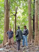 Indonesia Hardwood Logs - Teak Square Logs, 150+ mm