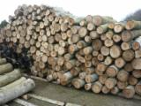 Walnut  Hardwood Logs - Walnut Saw Logs, 15-20 cm