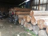 Лесистые Местности - Индонезия, Тик