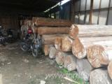 Ağaç Arazileri Endonezya - Endonezya, Tik