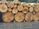 Firewood - -- cm Firewood Romania