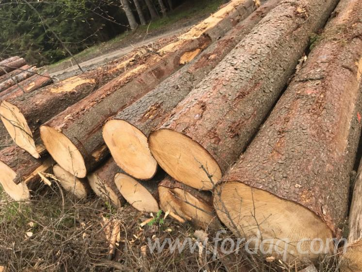 Wholesale Pine - Scots Pine, Spruce 35+ cm A; B; C Saw Logs from Poland