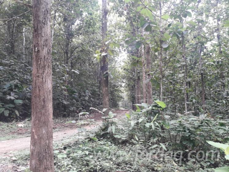 Teak-Woodland-from-Ecuador-600