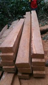 Fordaq wood market - AD Pau Rosa Sawn Timber, 100 x 200 mm