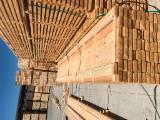 Netherlands Supplies - Pine (Pinus sylvestris) - Scots Pine, 25 mm