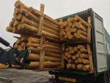 Cumpăra Sau Vinde  Stâlpi, Lemn Rotund Calibrat De Foioase - Buying Acasia Poles