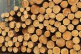 Latvia Softwood Logs - ABC Pine Logs, diameter 18+ cm