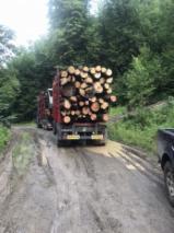 Firewood - -- mm Beech Firewood Romania