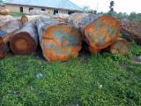 森林及原木 亚洲 - 锯木, 缅茄(苏)木, 非洲格木