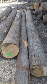 Wälder und Rundholz - Linde Schnittholzstämme