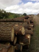 Wood Logs For Sale - Find On Fordaq Best Timber Logs - Radiata Pine  25 cm B Saw Logs Ecuador
