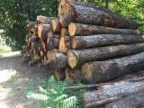 Russia Supplies - 6000m3 Russian oak logs available for dispatch *visiting China this week*