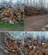 Hardwood  Logs For Sale - teak wood Certified FSC