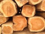 South America Hardwood Logs - 25/40/50 cm Teak Saw Logs from Ecuador