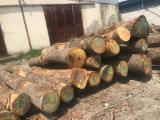 Find best timber supplies on Fordaq - Oak