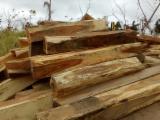 Bossen En Stammen Zuid-Amerika - Zaagstammen, Saman