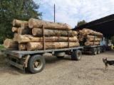 Finden Sie Holzlieferanten auf Fordaq - Schnittholzstämme, Eiche