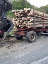 Hornbeam Hardwood Logs - -- mm Hornbeam, Beech Firewood Romania
