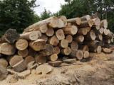 Păduri Şi Buşteni - Vand Bustean De Gater Stejar in Краснодарский Край
