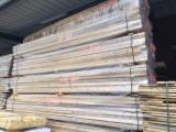 Trova le migliori forniture di legname su Fordaq - Vendo Boules Poplar - Tulipier  50; 65; 78 mm