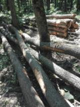 Firewood - -- mm Firewood from Romania