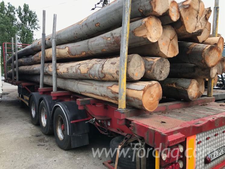 35--cm-Beech--Oak