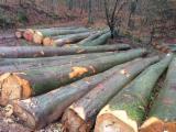 Peeling Logs - 40+ cm Beech Peeling Logs from Germany, Süd-West