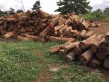 null - Schnittholzstämme, Rhodesian Copalwood, African Rosewood, Kossoholz, PEFC/FFC