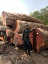 Merbau Hardwood Logs - Merbau Logs Kwila Logs