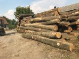 Offers Serbia - European Hardwood Logs, Oak