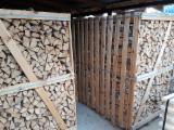 Belarus - Fordaq Online tržište - Breza Drva Za Potpalu/Oblice Cepane Belarus