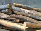 Firewood - -- mm Beech, Oak Firewood Romania