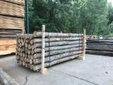 Conical Shaped Round Wood - 10-14 cm Chestnut Poles Spain