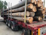 35+ cm Brown Ash, Beech, Oak Saw Logs from Poland