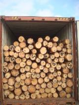 Orman Ve Tomruklar Almanya - Kerestelik Tomruklar, Çam - Redwood, Maritime Çamı , Ladin - Whitewood