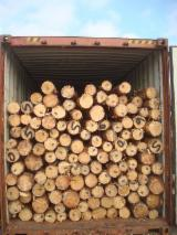 Spruce  - Whitewood Softwood Logs - Pine  - Scots Pine, Maritime Pine , Spruce  14;  25+ cm ABC Saw Logs