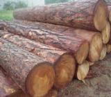 South America Sawn Timber - Siberian Larch Lumber ready for transportation