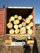 Forest And Logs Germany - 30+ cm Beech Saw Logs Germany
