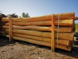 Acacia Hardwood Logs - Robinie masts, poles from Hungary