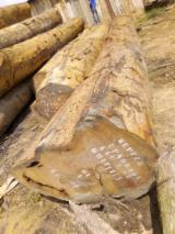 Azobé Hardwood Logs -  79-80 cm Azobé  Logs For Stave Wood from Cameroon, Douala