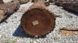 Find best timber supplies on Fordaq - Land of Indiana, Inc - 3sc and 4sc Walnut Veneer Logs