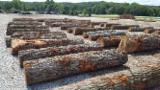 Bosques Y Troncos América Del Norte - Venta Troncos Para Aserrar Roble Blanco FSC Estados Unidos Indiana