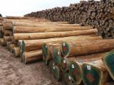 Brasilien - Fordaq Online Markt - Stämme Für Die Industrie, Faserholz, Eukalyptus