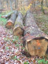 Find best timber supplies on Fordaq - Mallo Bois - 50+ cm Oak Saw Logs from France,