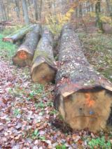 France Hardwood Logs - 50+ cm Oak Saw Logs from France,