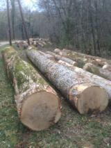Hardwood Logs for sale. Wholesale Hardwood Logs exporters - 30+ cm White Ash Saw Logs from France
