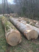 Ash  Hardwood Logs - 30+ cm White Ash Saw Logs from France